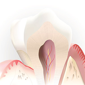 Animated imaged of root canal system